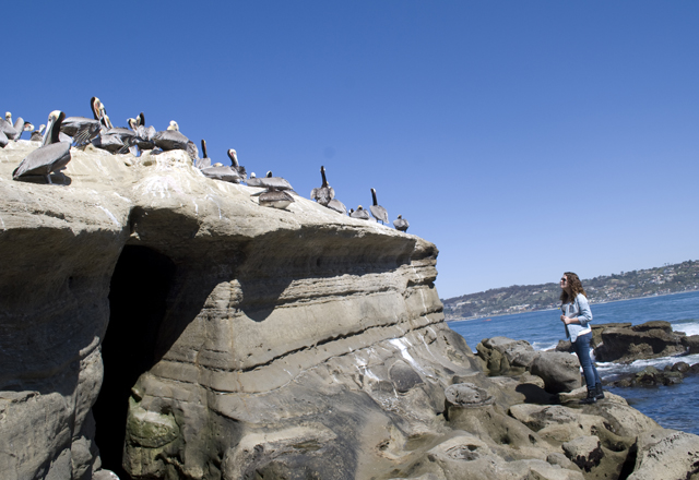 Exploring the La Jolla Coast, California | Em Busy Living