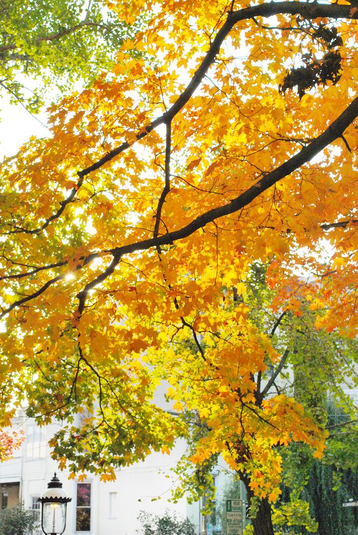 Fall in The Fan, Richmond | Em Busy Living